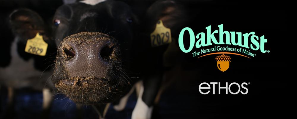 Oakhurst Dary